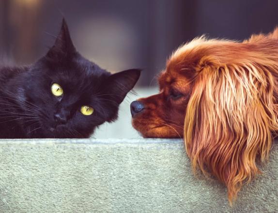 Haustiere 574x440 - Tierfutter für Hunde, Katzen, Pferde und Vögel